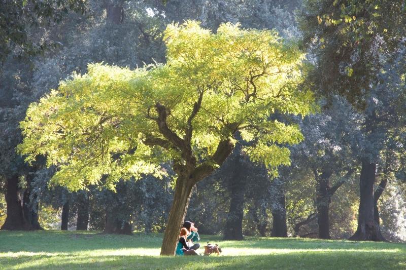 Stampe artistiche quadri e poster con alberi colori for Foto di alberi da colorare