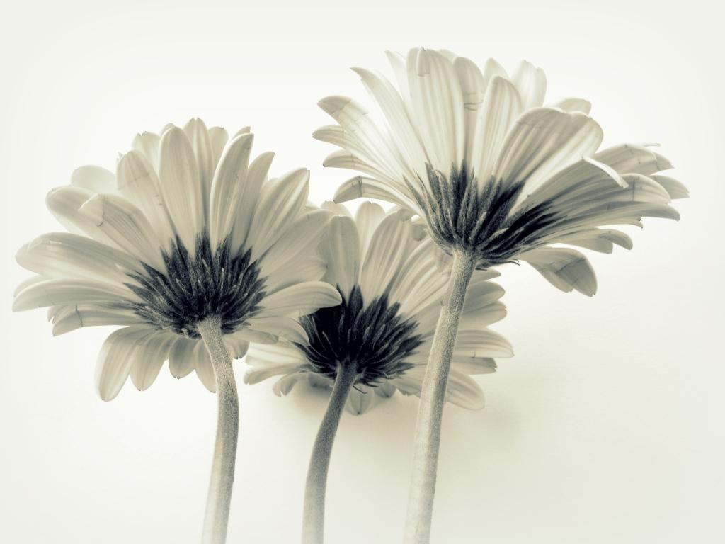 Stampe e quadri floreali, poster di fiori e piante - Pixtury.com