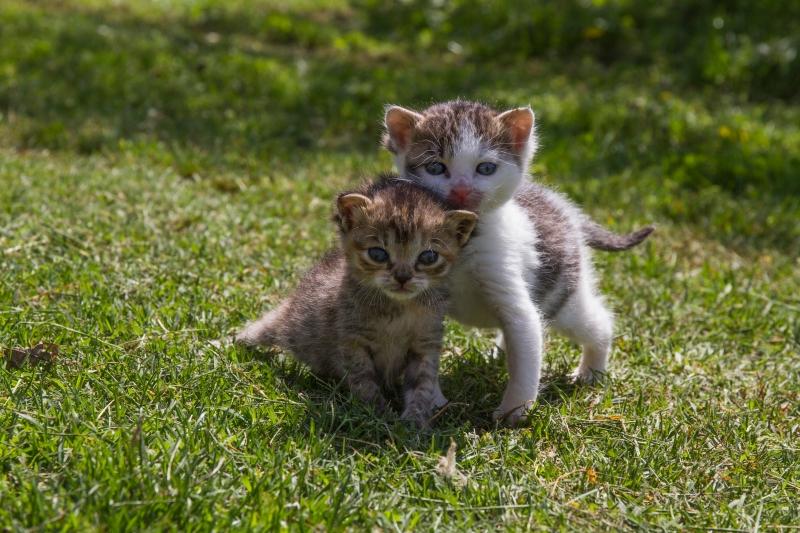Google Ai Cat Pictures
