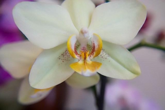 Stampe e quadri floreali poster di fiori e piante for Orchidea prezzo