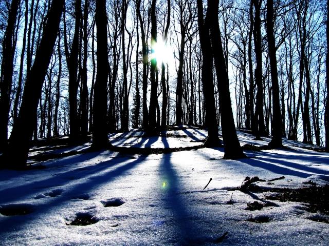 Foto e poster di un paesaggio con un bosco e la neve