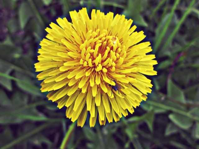 yellowflower