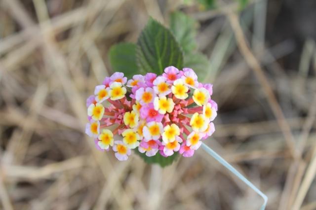 Foto e poster di un mazzetto di fiori lilla