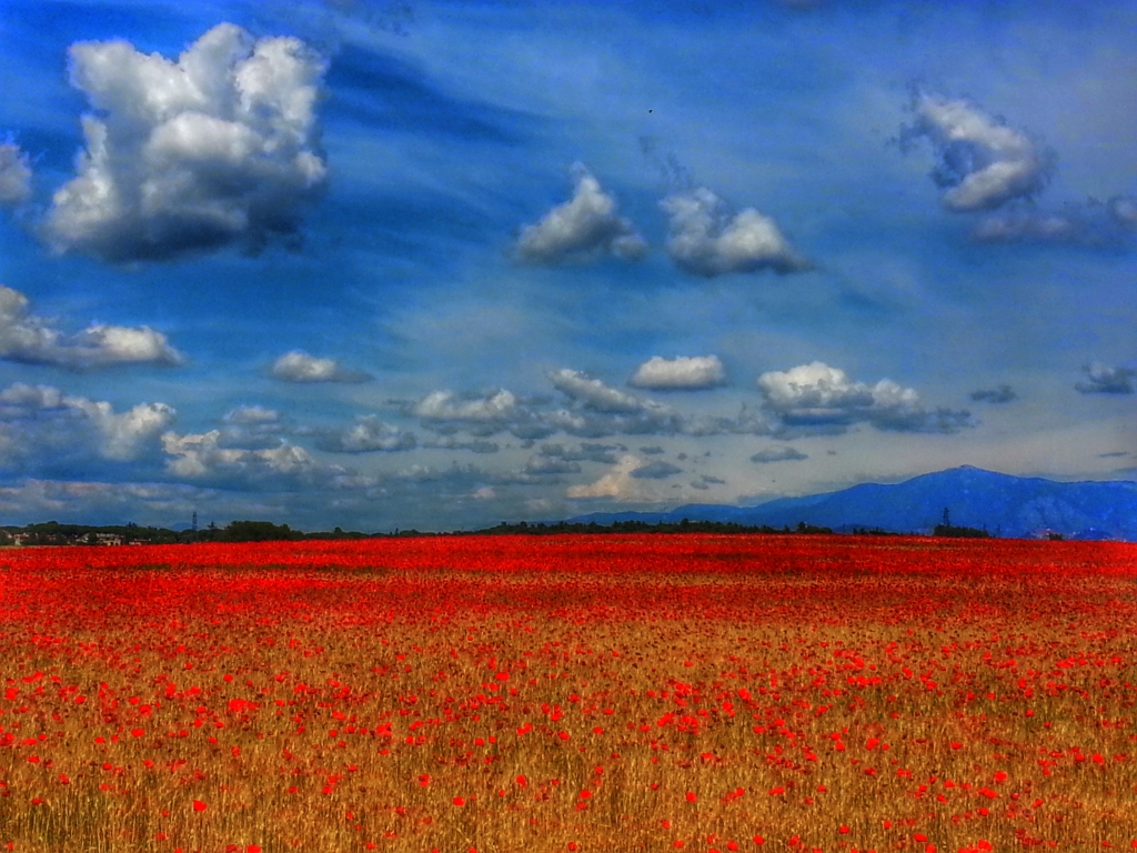 Stampe artistiche quadri e poster con fiori natura for Stampe di campagna francese