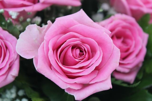 Foto e immagini di fiori come sfruttarle al meglio per for Immagini di quadri con fiori