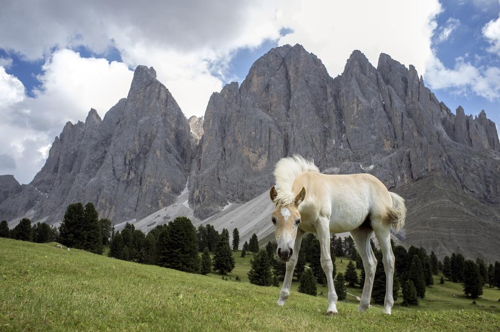 Stampe artistiche quadri e poster con cavalli dolomiti for Cavalli arredamento