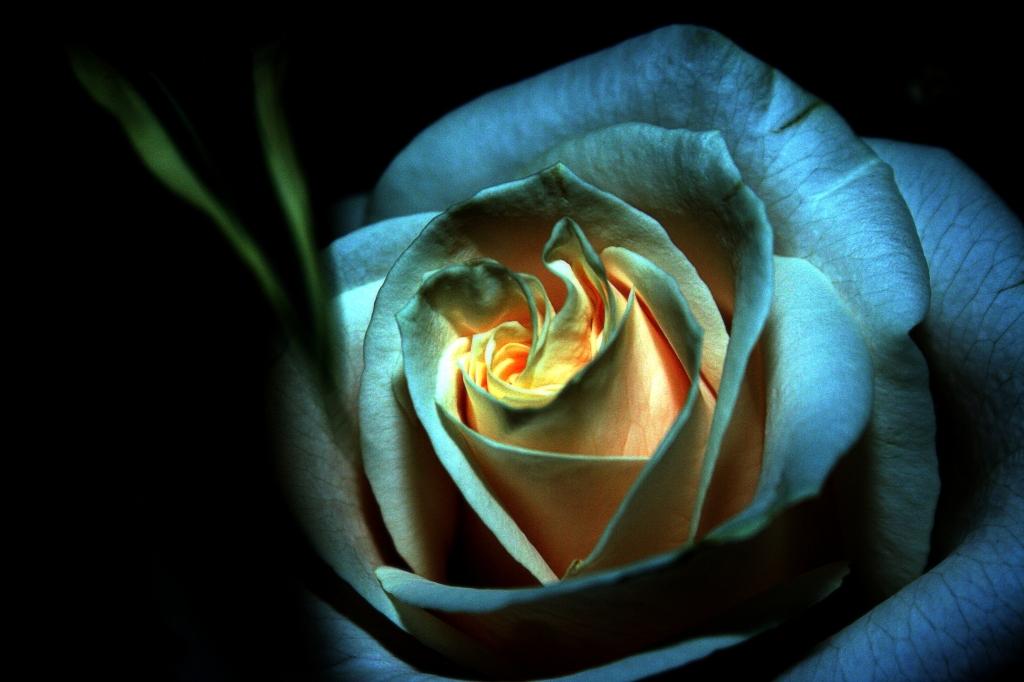 Stampe artistiche quadri e poster con arancione blu for Immagini di quadri con fiori