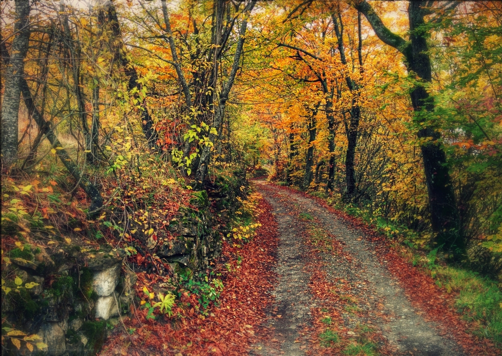 Stampe artistiche quadri e poster con alberi autunnale for Cabina innevata nei boschi