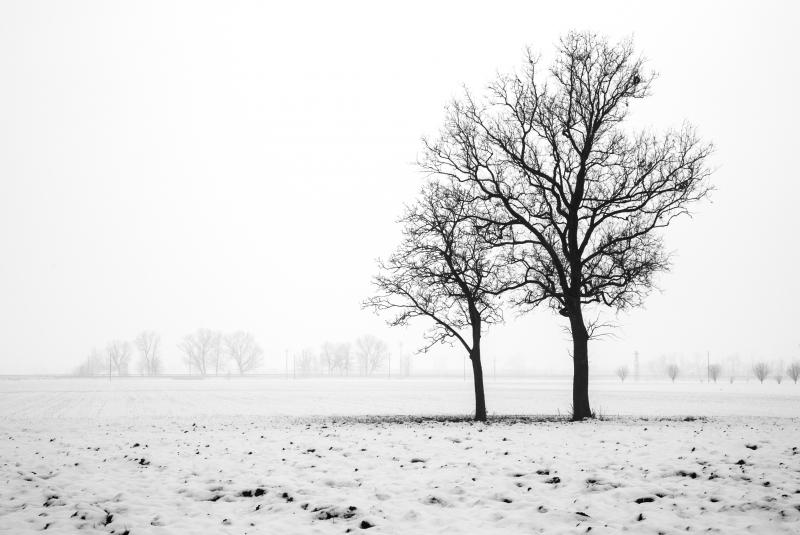 Stampe Artistiche Quadri E Poster Con Bianco E Nero Nebbia Neve