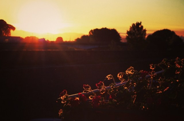 Flowers in Sunrise