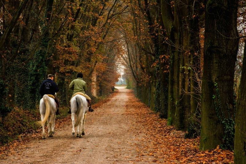 Stampe artistiche, quadri e poster con alberi, autunno, cavalli ...