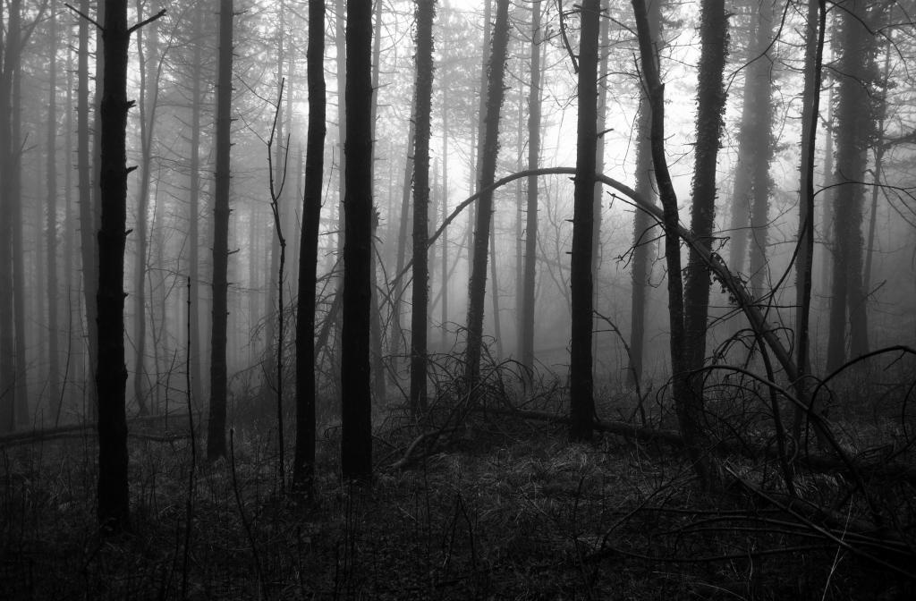 Stampe artistiche quadri e poster con alberi bianco e for Foto hd bianco e nero