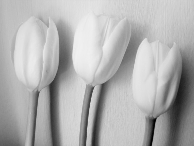 tulipes decor
