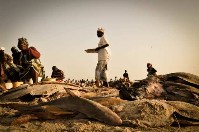 Senegal #03_ fresh fish_