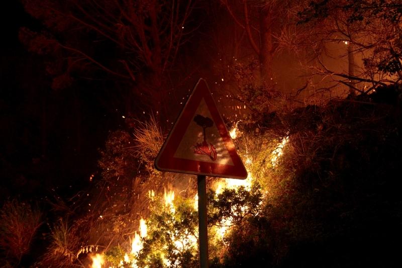 Stampe artistiche quadri e poster con boschi fiamme fuoco