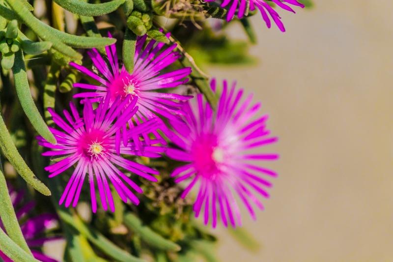 Stampe artistiche quadri e poster con fiori petali for Pianta rampicante con fiori viola a grappolo