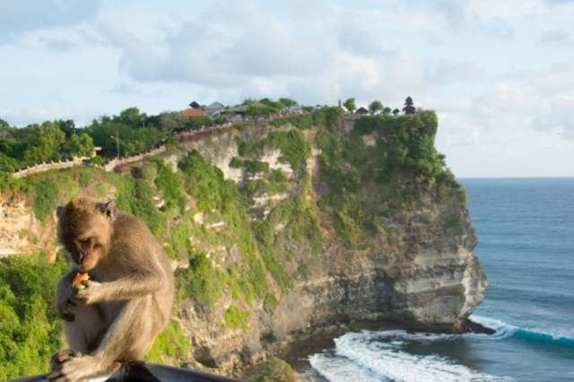 Monkeys at Uluwatu Temple