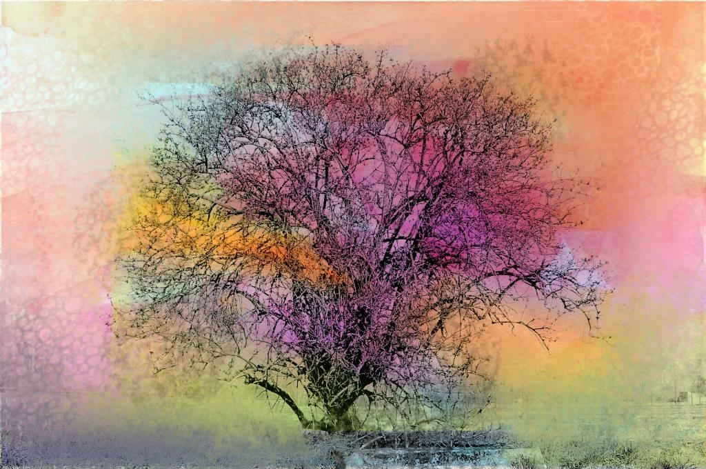 Stampe artistiche quadri e poster con alberi arcobaleno for Stampe paesaggi naturali