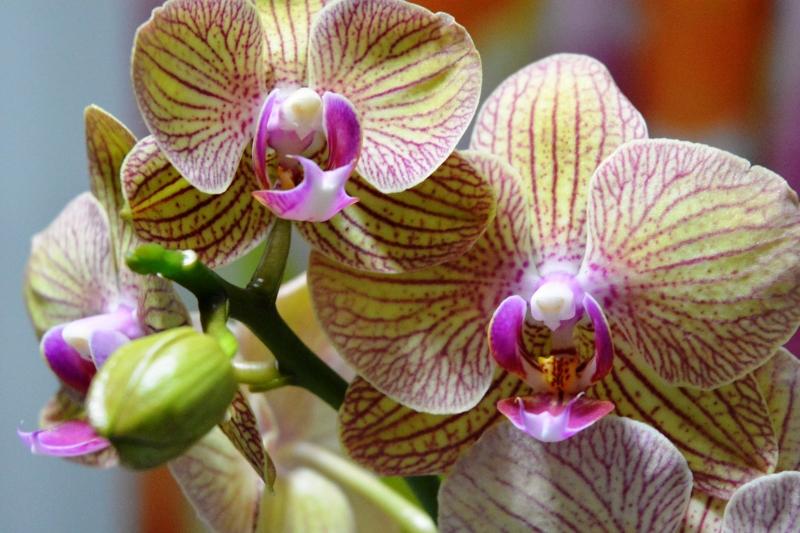 Stampe artistiche quadri e poster con fiori flora primi for Quadri moderni orchidee