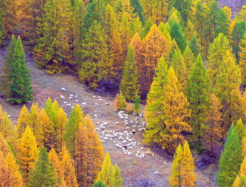 Stampe artistiche quadri e poster con alberi autunno for Stampe paesaggi naturali
