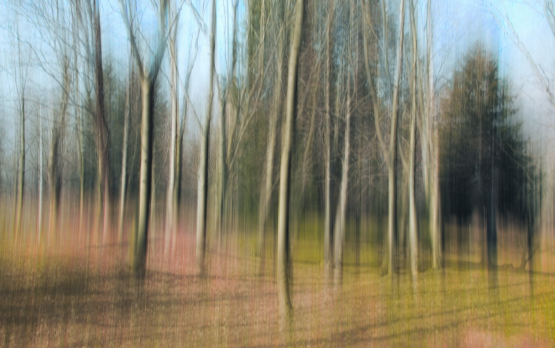 Stampe artistiche quadri e poster con alberi astratto autunno