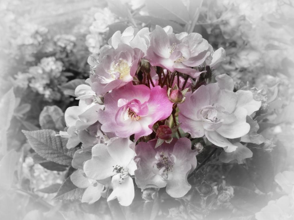 Stampe artistiche quadri e poster con chiari fiori for Quadri di fiori