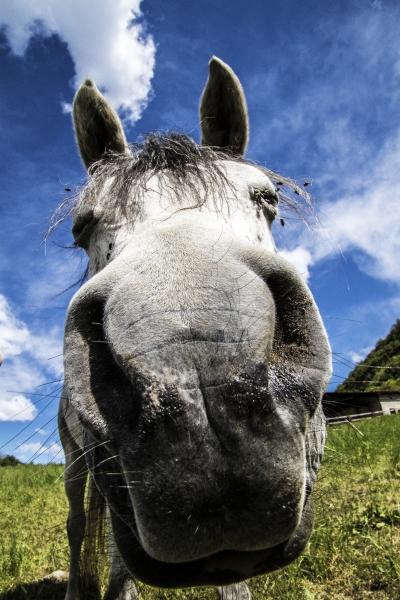 Stampe artistiche, quadri e poster con animale, cavalli, cavallo ...