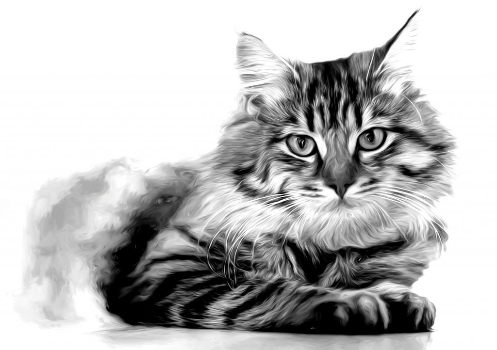 Stampe artistiche quadri e poster con animale animali for Dipinti moderni bianco e nero