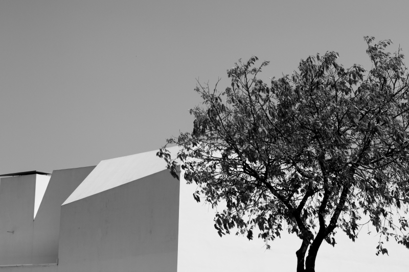 Quadro moderno, poster e stampa artistica con architecture, architettura, b&w, black and white, black&white, tree