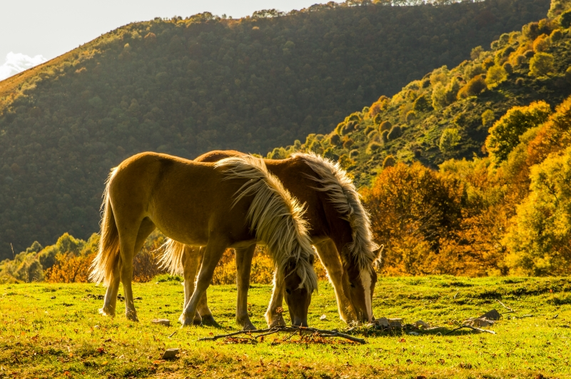 Stampe artistiche, quadri e poster con animali, autunno, cavalli ...