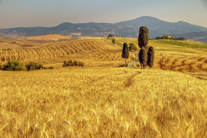 Stampe artistiche, quadri e poster con campagna toscana, campi ...