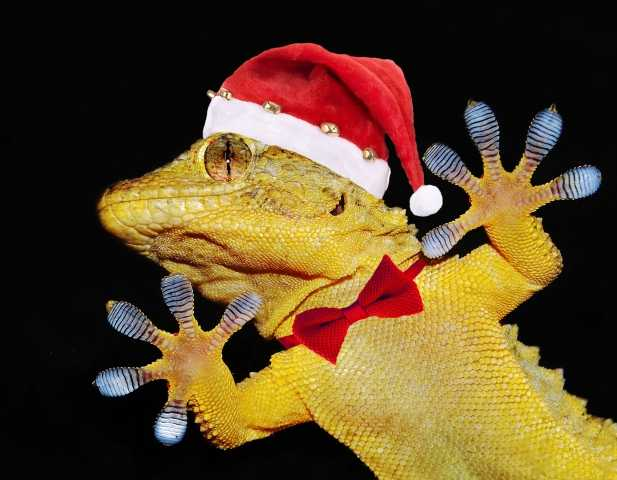 gecko with christmas hat and bow tie
