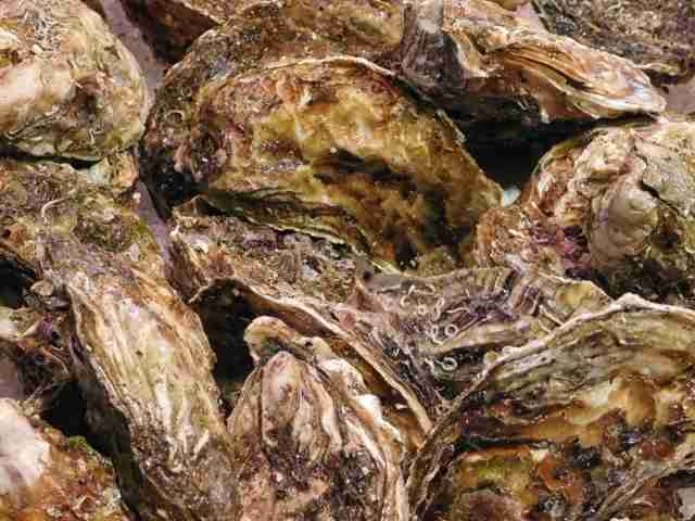 texture of oysters