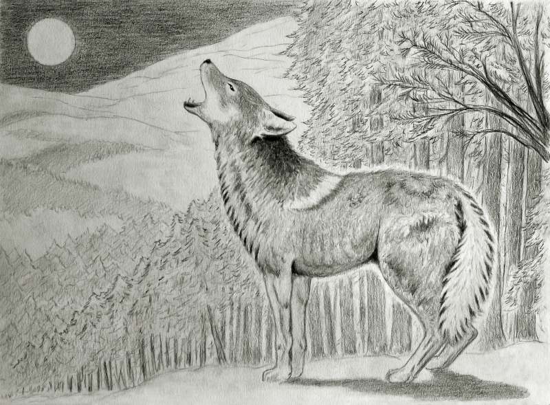 Stampe artistiche quadri e poster con animale arte for Lupo disegno a matita