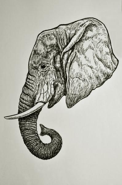 Stampe Artistiche Quadri E Poster Con Animale Arte Bianco E Nero