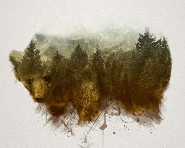 Quadro moderno e stampa - The Bear