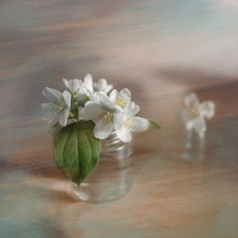 Apple flowers in a jar fantasy