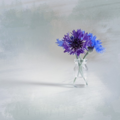 Cornflowers in a vial Minimalism fantasy